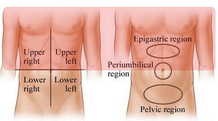 abdominal regions areas upper