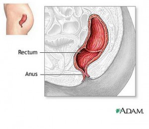 normal rectum