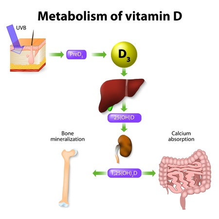 Vitamin D Physiology