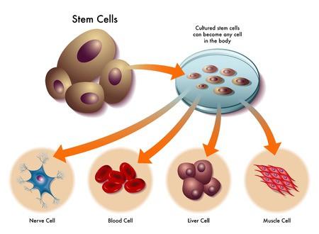 Benefits of Stem Cells