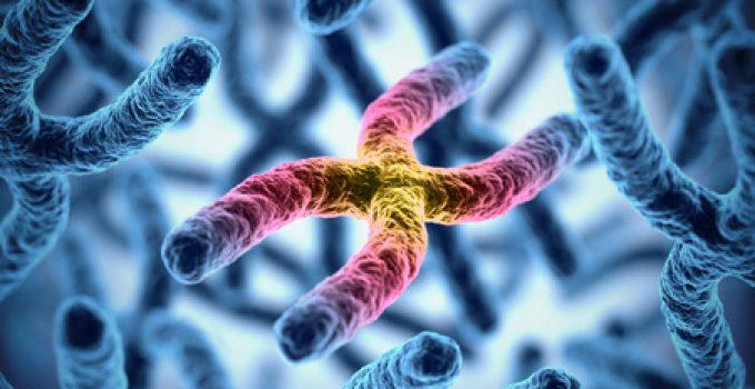 Genetically Inherited Diseases