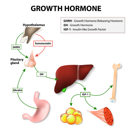 Growth Hormone Deficiency - Pituitary Gland
